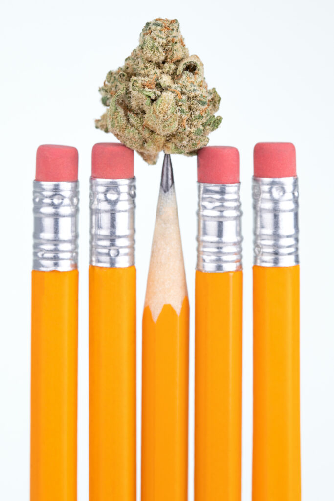 Marijuana flower on the point of a school pencil, isolated on white