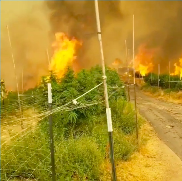 ERB farms of Northern California burns Aug. 19 in the SCU Lightning Complex Fire (Courtesy ERB Farms)